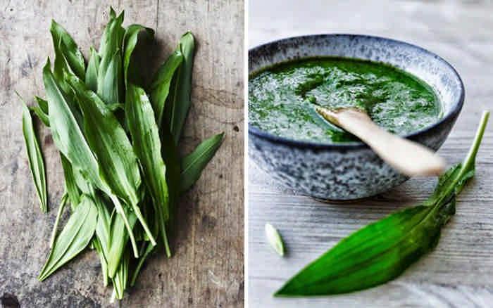 Как приготовить черемшу: рецепты лечебных настоек и маринования
