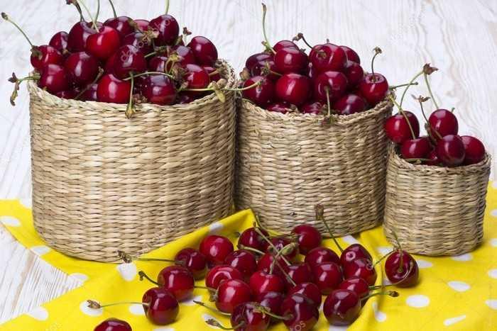 Рецепты заготовки вишни на зиму