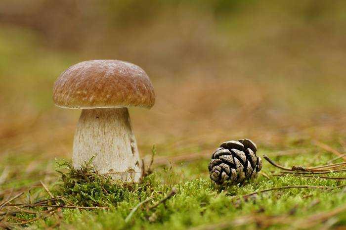 Жаренные белые грибы