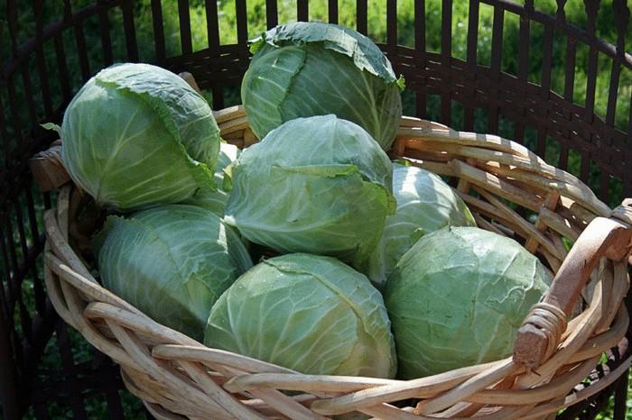 капустные оладьи на кефире