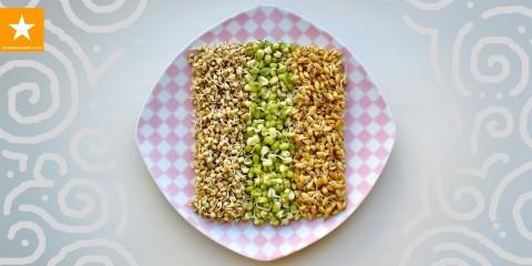 Пророщенная пшеница — зеленая лужайка в домашних условиях HOW TO GROW WHEATGRASS — YouTube