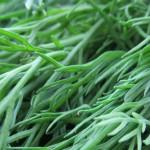 Секретики, как сохранить зелень свежей дольше