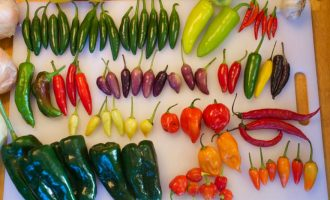 Что делает перец острым? Виды и классификация перцев по жгучести