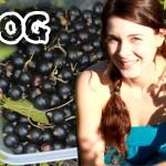 VLOG 2 кукуруза летние лакомства на даче — YouTube