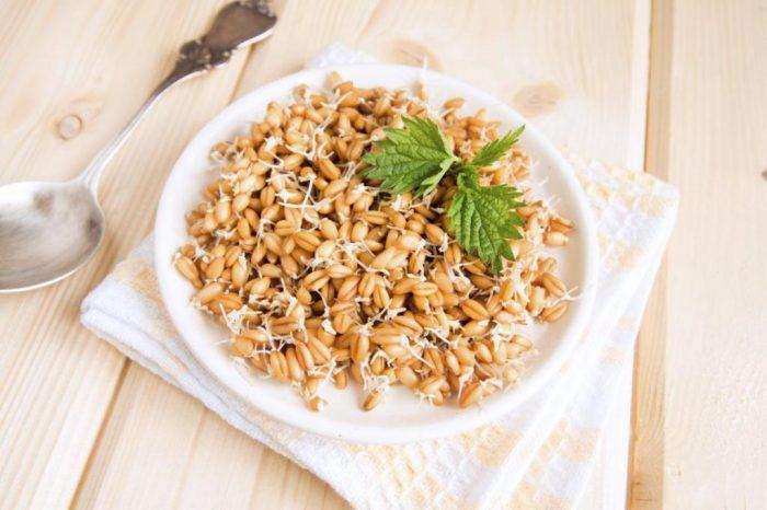 Пророщенная пшеница: правила приготовления злакового продукта