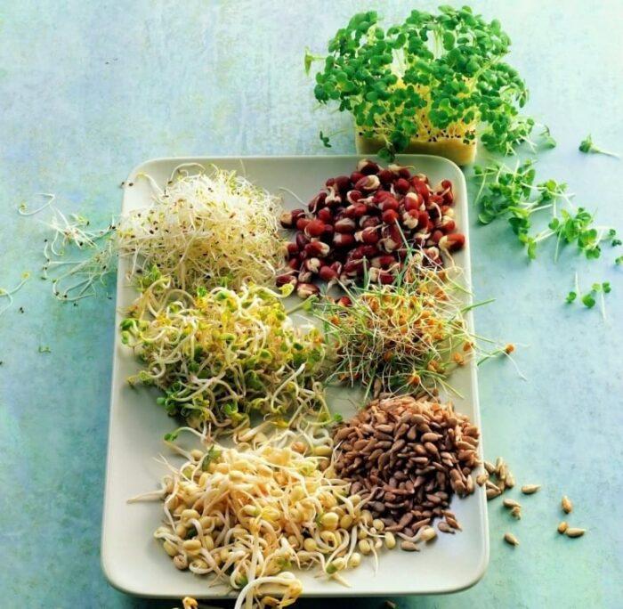 Как проращивать семена для еды в домашних условиях